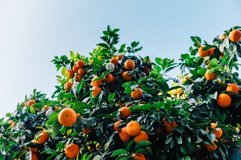 orange-small
